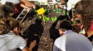 huerto urbano inicio curso 19 20 (4)